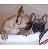 Nadin and Ludovic take a bath